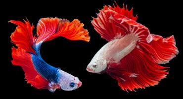 fish-home-bg-1
