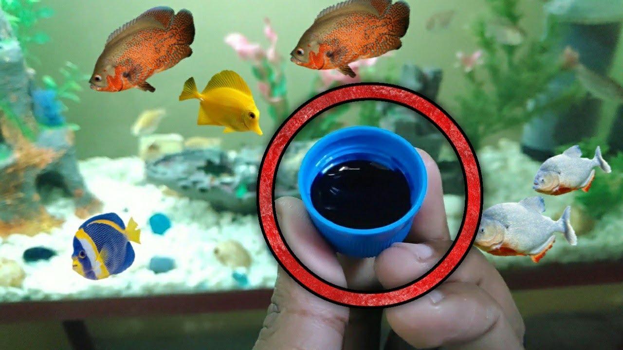 Aquarium Medicine